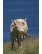 Comprar carne de vaca vasca   Tienda online de Baserria KM0